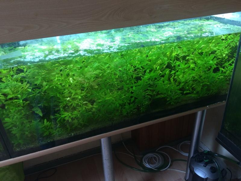 Quels poissons pour un aquarium 60l 100l et 120l for Poisson aquarium 60l