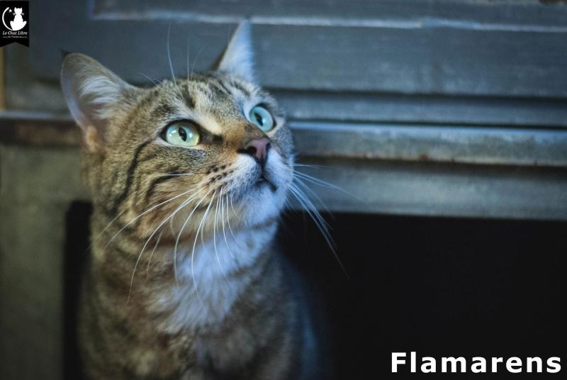 flamar10.jpg