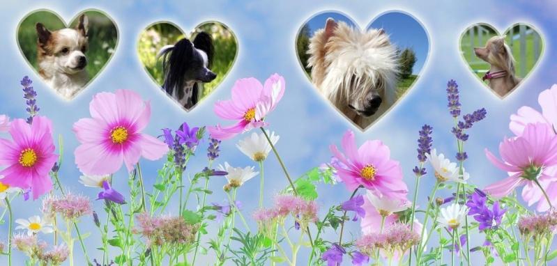 Un amour de chien Chinois