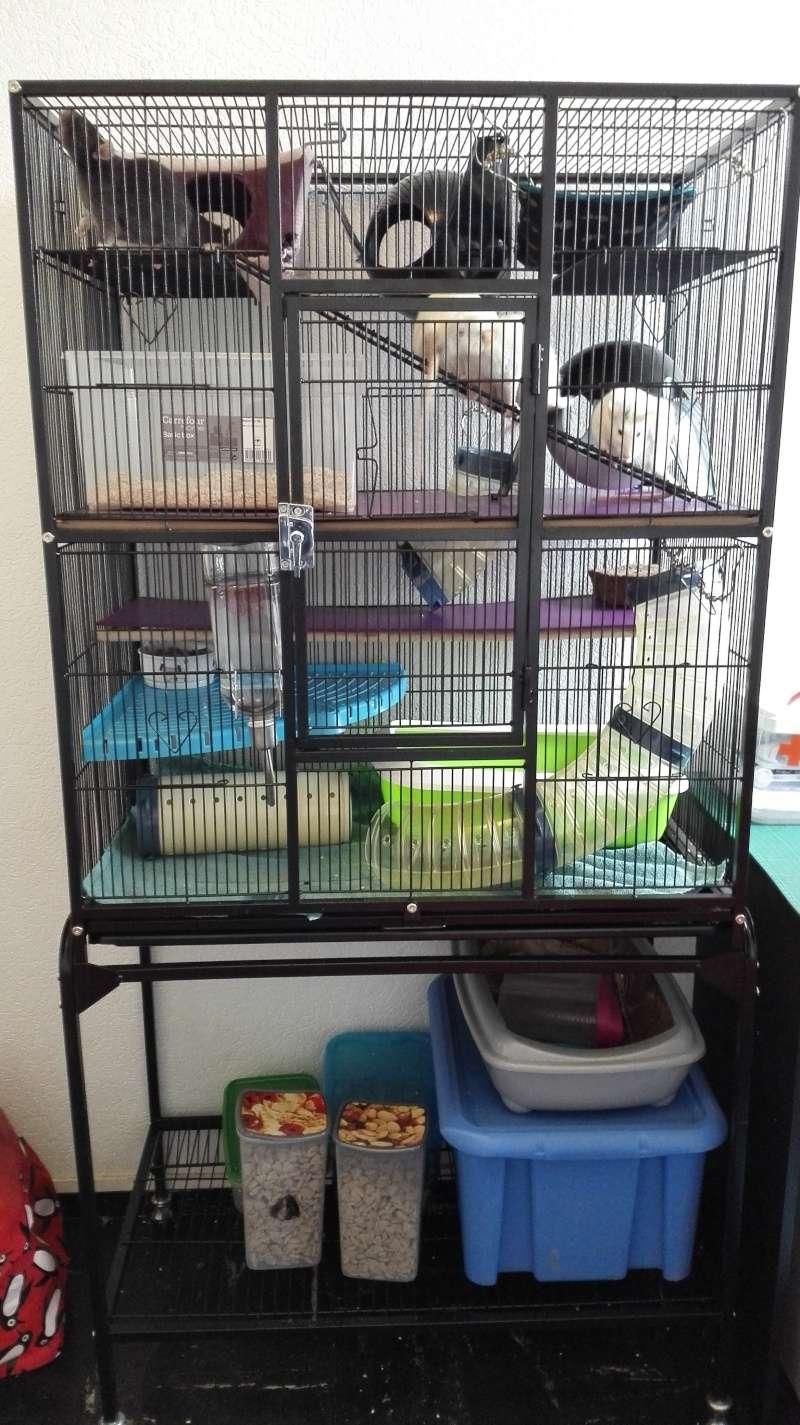 photos de vos cages page 6. Black Bedroom Furniture Sets. Home Design Ideas