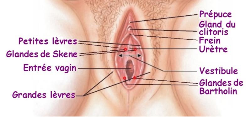 Le pénis à l'intérieur du vagin