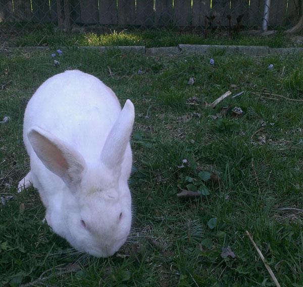bunny10.jpg