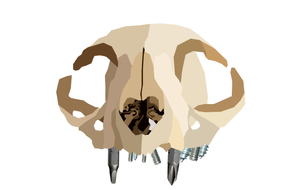 skull11.png