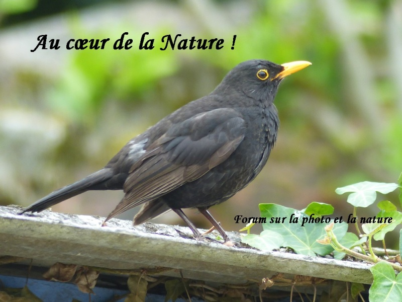 Faune-Nature-Photos : Forum photo !