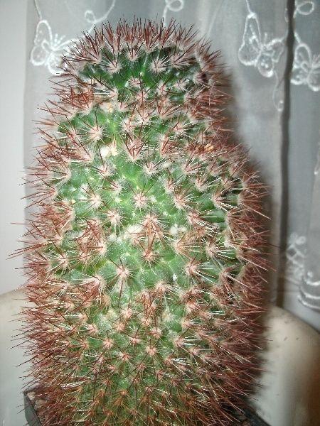 kaktus17.jpg