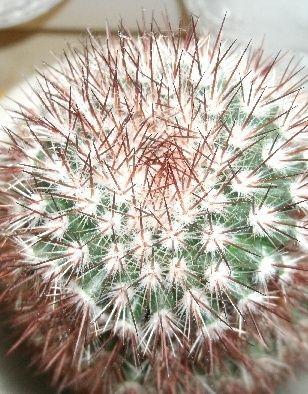 kaktus18.jpg