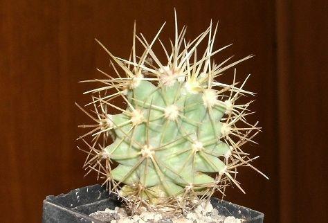 kaktus21.jpg