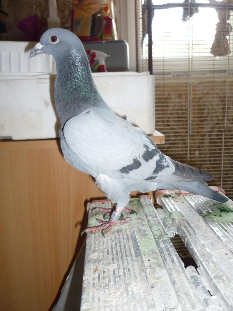 nourriture pigeon pour un nouveaux pensionnaire. Black Bedroom Furniture Sets. Home Design Ideas