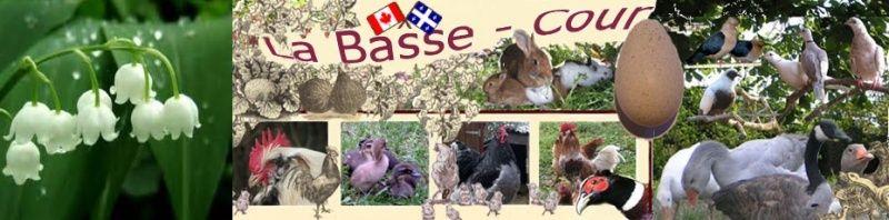 La Basse-Cour