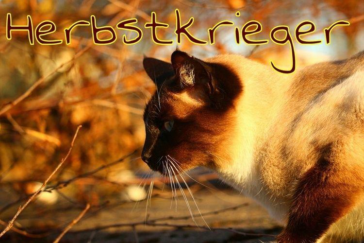 Warrior Cats - Das RPG