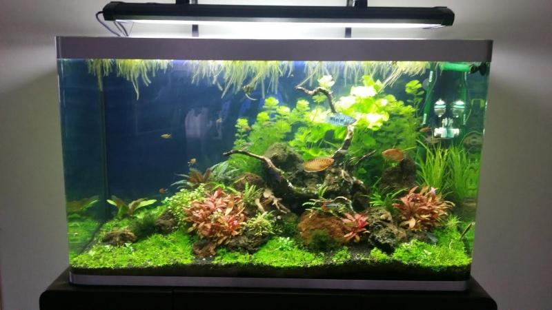 Pr sentation de mon bac osaka 260 litres for Aquarium osaka 260