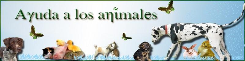 Los Amantes de los Animales