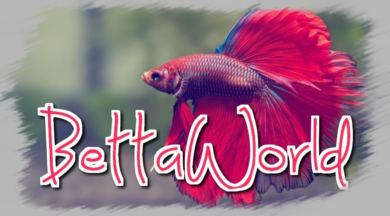 BettaWorld