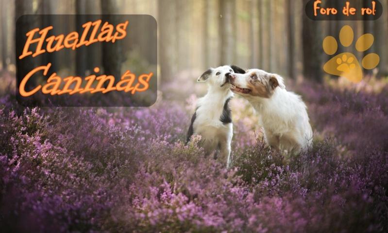 Huellas Caninas
